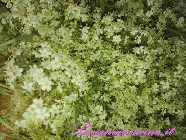 Inserire nel vaso i fiori di sambuco privati del gambo.