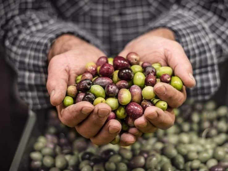 olio extravergine oliva biolevante